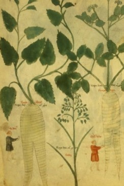 What Is Plant-Thinking?: Botany's Copernican Revolution