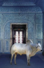 [VIDEO] Photographer Spotlight: Karen Knorr