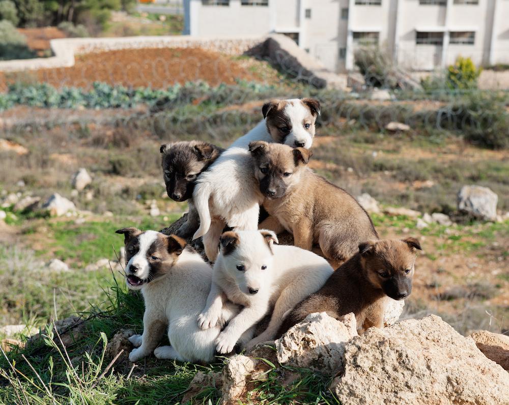 Beit Jala, January 11, 2010