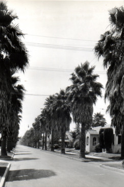 Piety and Perversity: The Palms of Los Angeles