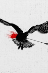 Thirteen Ways of Looking at a Black Bird