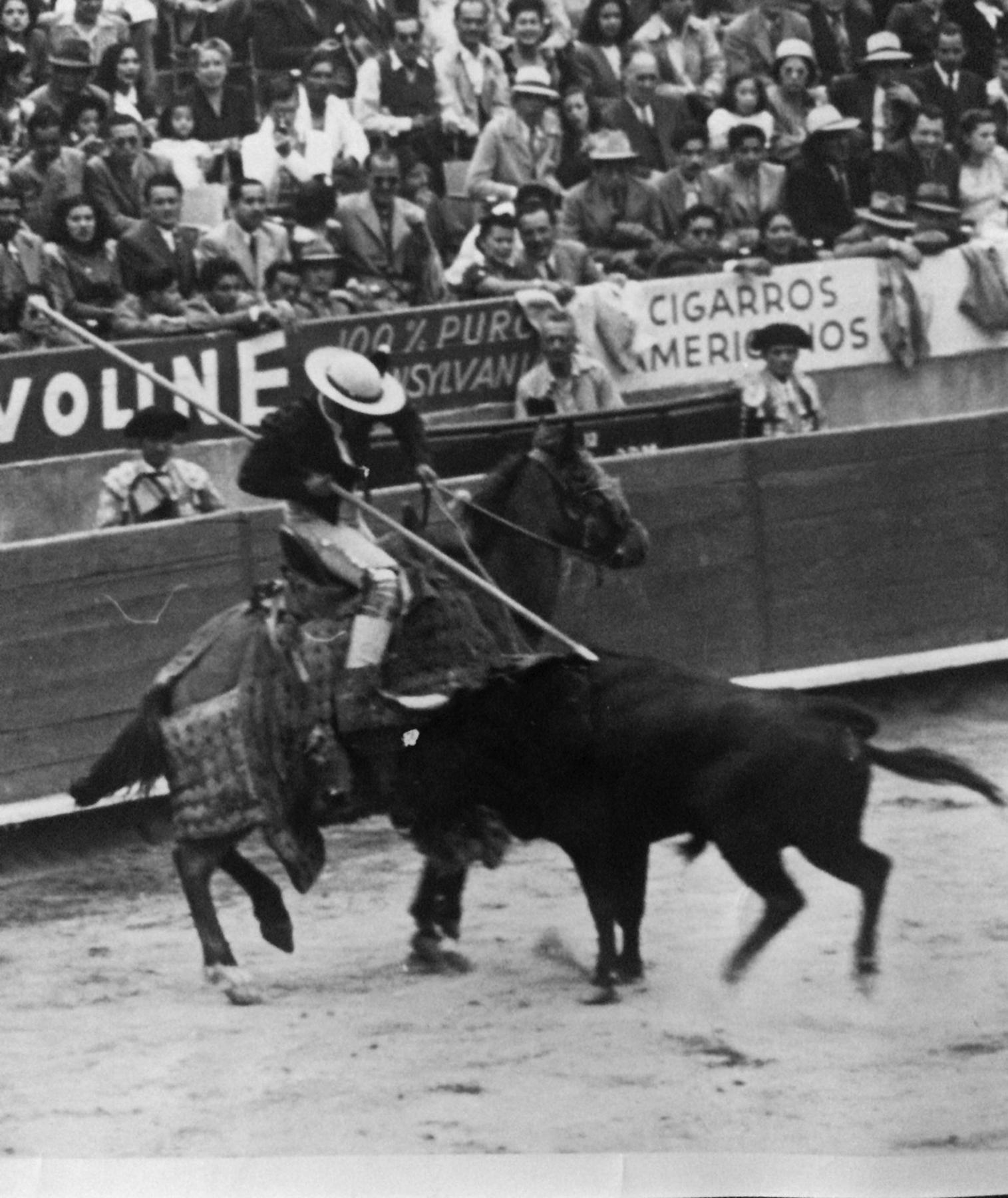 Matador and bull 5